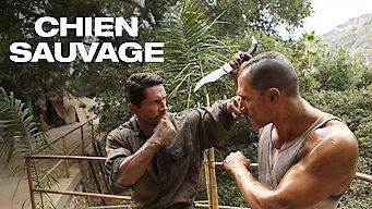 Chien Sauvage (2017)